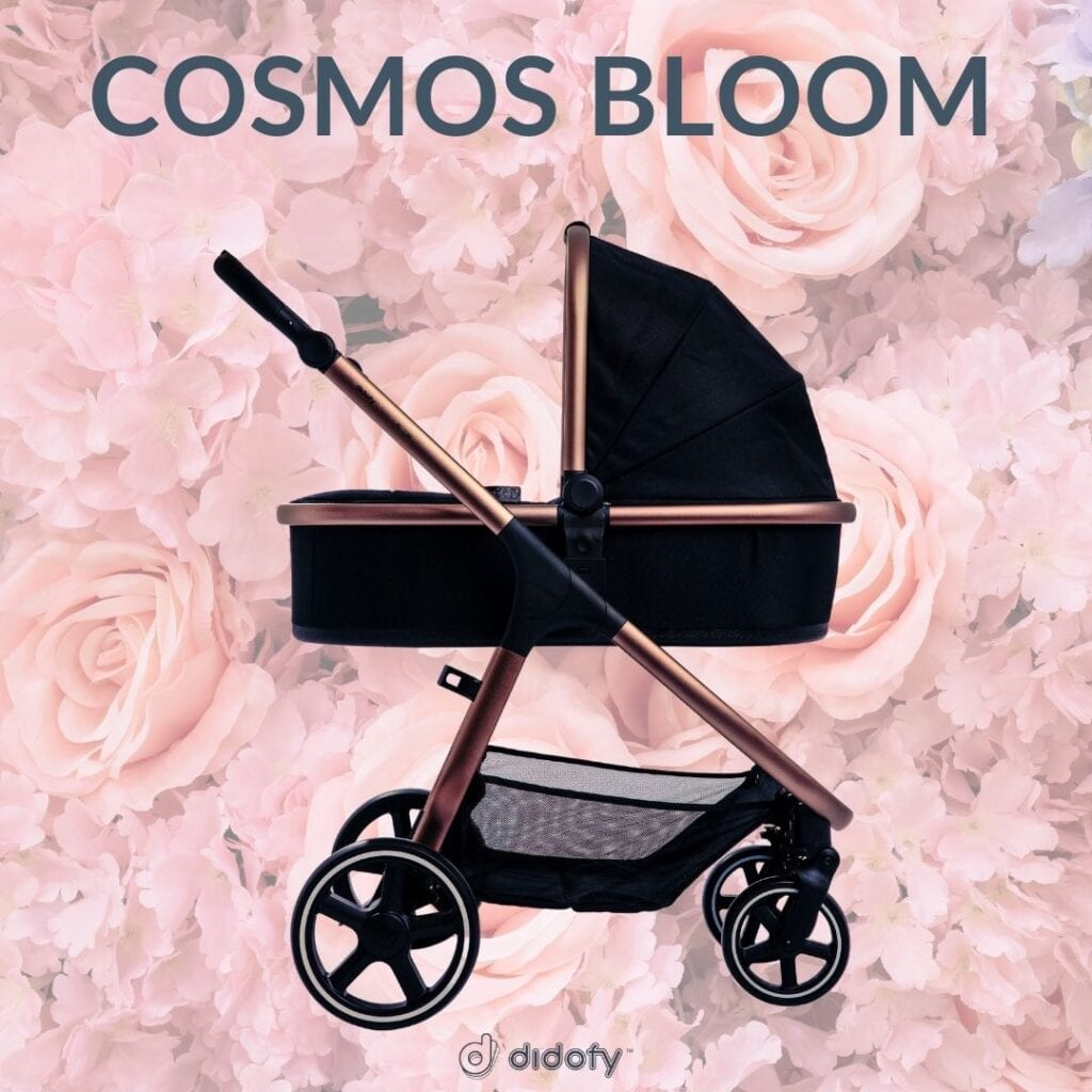 didofy Cosmos Bloom